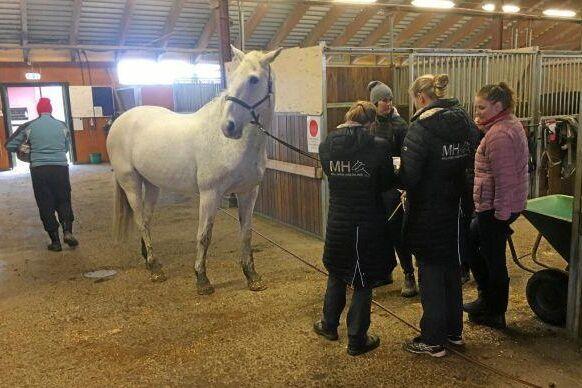Ny provtagning hos hårt prövade Skånsta ryttare visade att ytterligare sju hästar bär på viruset EHV-1.