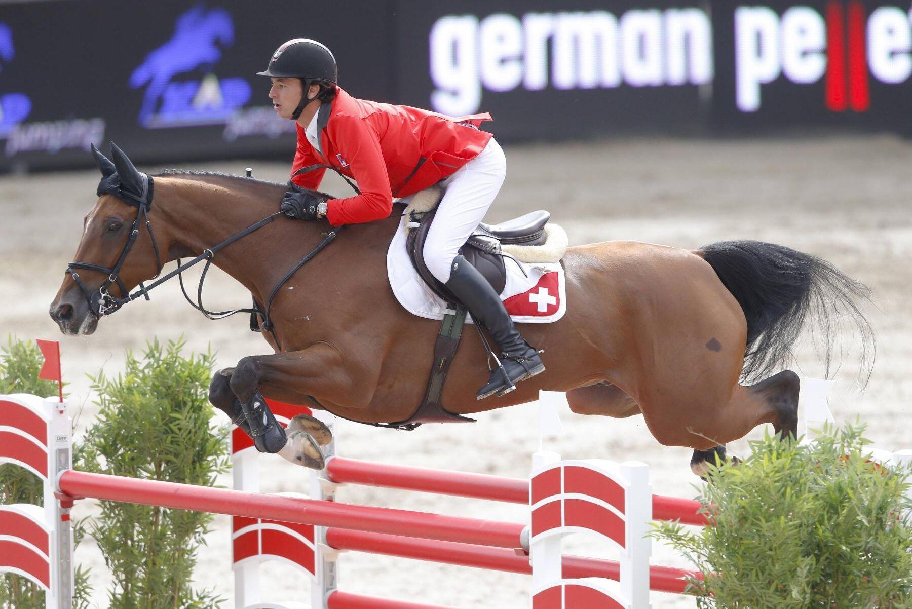 OS-hästen Nino Des Buissonets, har varit framgångsrik på tävlingsbanorna. Embryot som kan bli hennes helsyskon kostade 26 000 euro på auktionen.