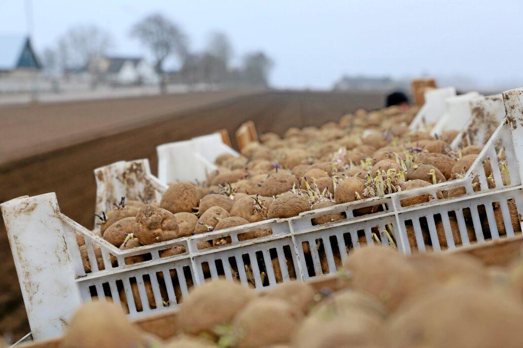 Odlare har varit ute i ovanligt god tid efter fjolårets torka och många sorter är redan slutsålda.
