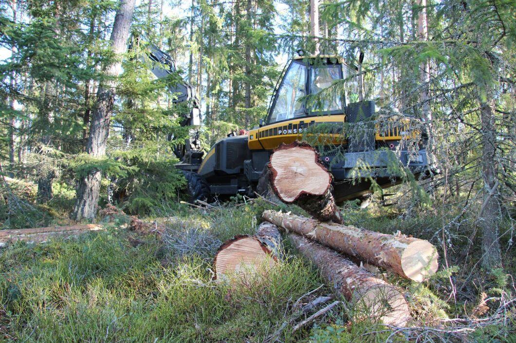 """Sveaskog vill öka den biologiska mångfalden i sina skogar. """"Det här är vad Sveaskog anser vara ett hållbart skogsbruk"""", säger styrelseordförande Eva Färnstrand."""