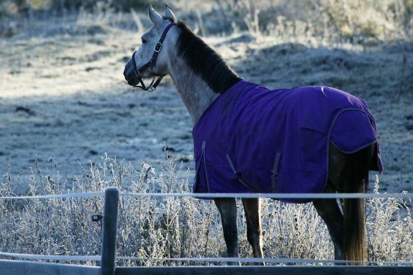 Arkivbild. Djurskyddsinspektören från länsstyrelsen har hästverksamhet utan laga tillstånd.
