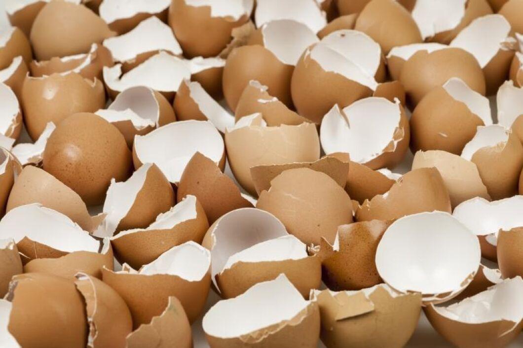 Lokalt motstånd knäckte äggplanerna i Alsen.