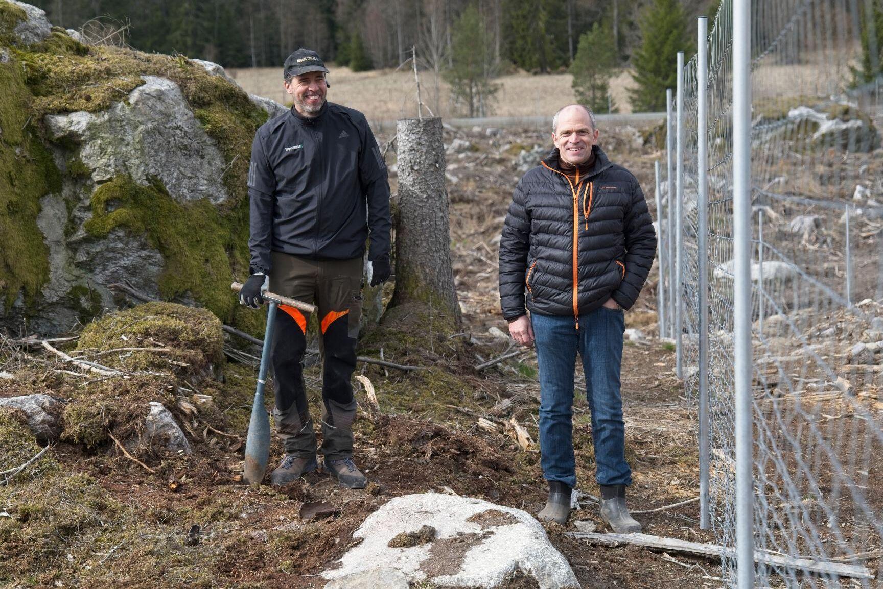 Planteringsbasen Martin Spåre och skogsägaren Lars Forsling på bokplanteringen norr om Västerås. Hygget stängslades innan planteringen.