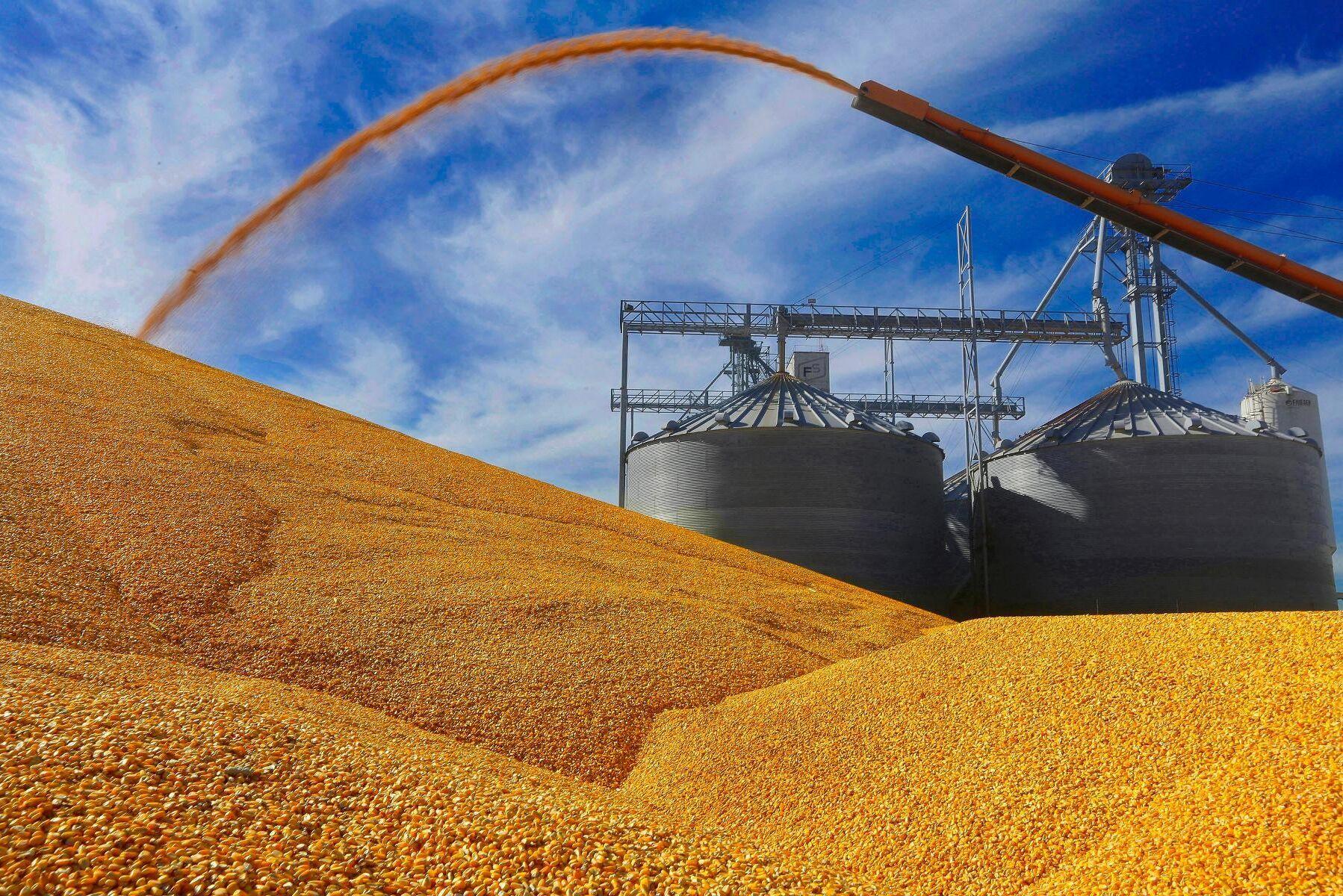 Argentina fryser exporten av majs. Arkivbild.
