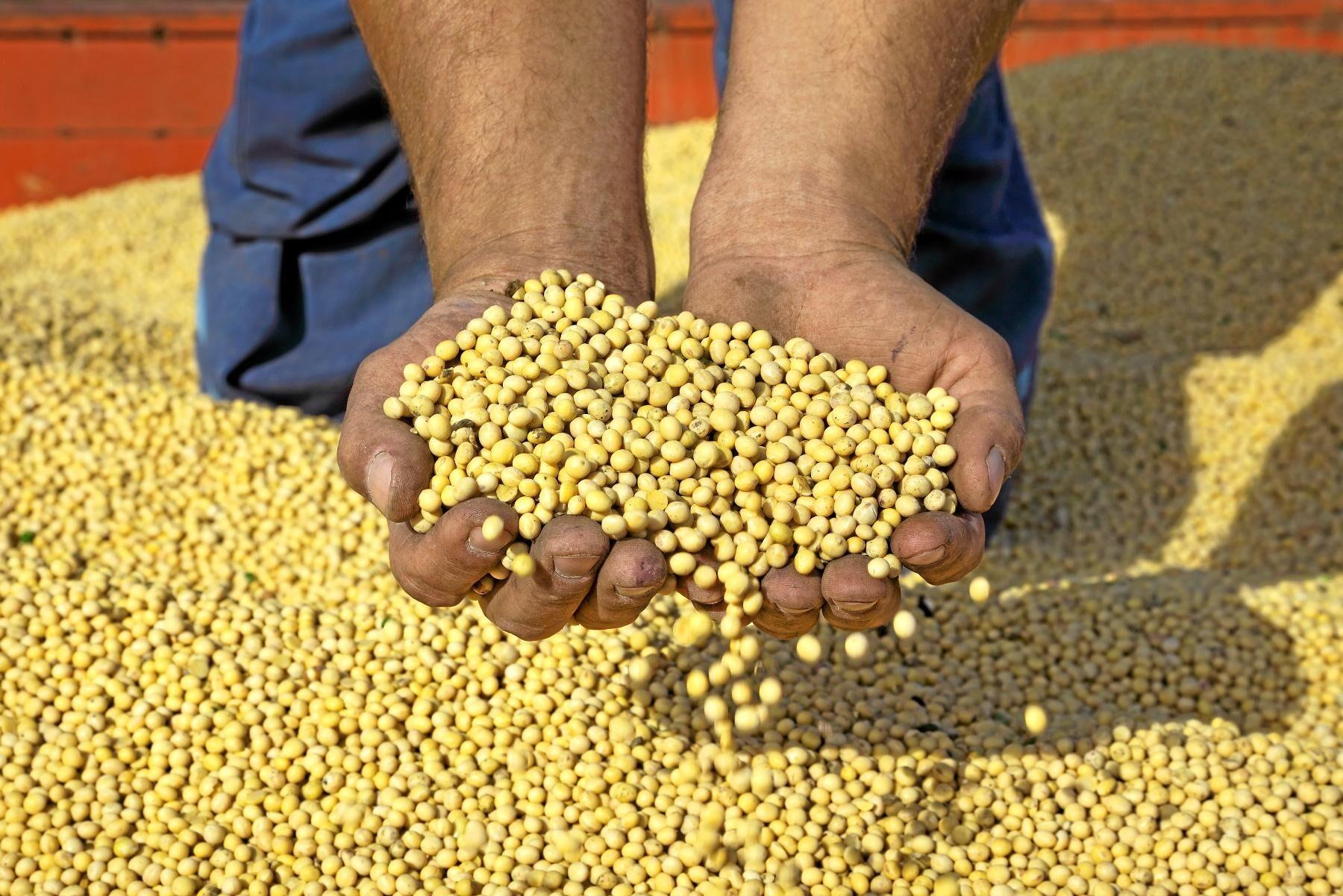Kinas strafftullar har gjort amerikanska sojabönor billigare. Arkivbild.
