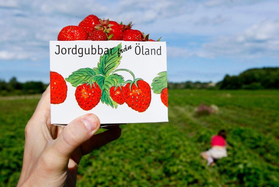 Frosten ställde till det och nu slår jordgubbspriserna i höjden.