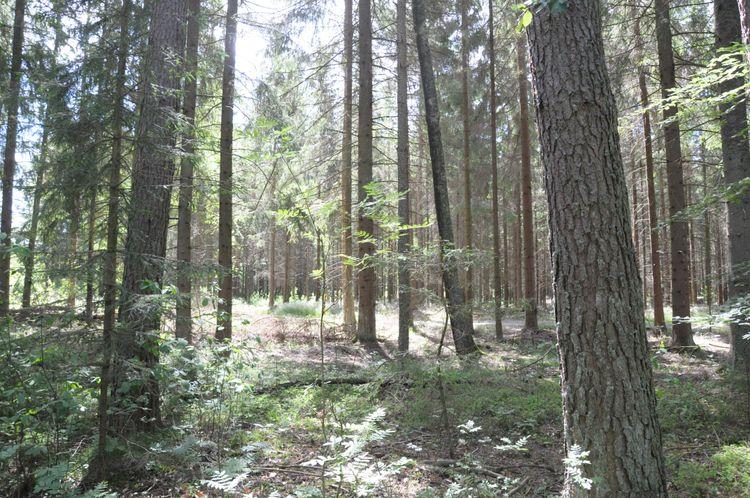 Avverkningsredo skog i Dalsand.