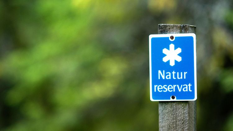 Strikt tolkning av skyddad skog drabbar Sverige