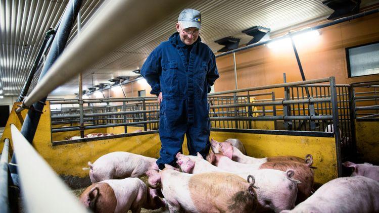 Höga grispriser – men låg lönsamhet