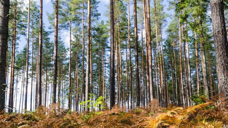 Bästa skogsinvesteringen i Stockholm