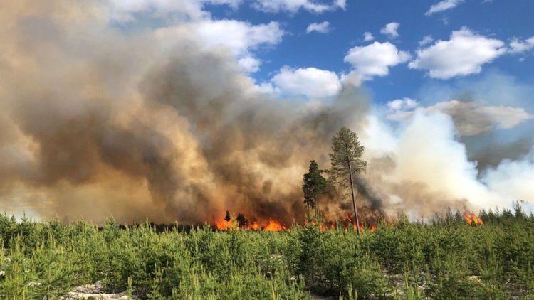 Misstänkt brott vid stor skogsbrand