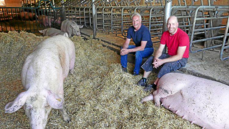 Rekordmånga grisar på Skånegård
