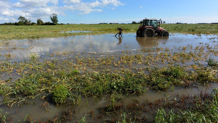 15000 hektar spannmålsodling försvann