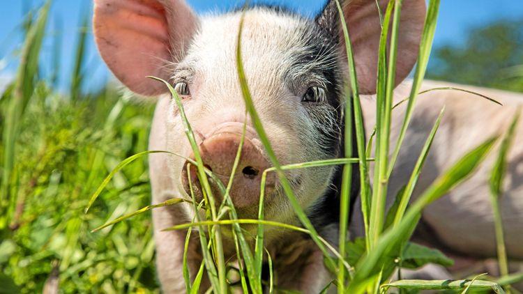 Skärpta straff för brott mot djur föreslås