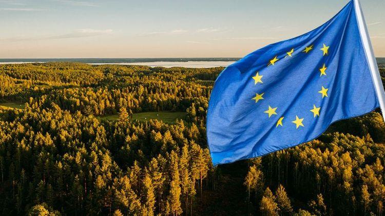 Kommissionen vill ta starkare grepp om EU:s skogar