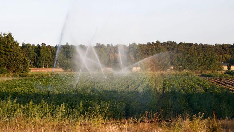 Låga grundvattennivåer i södra Sverige