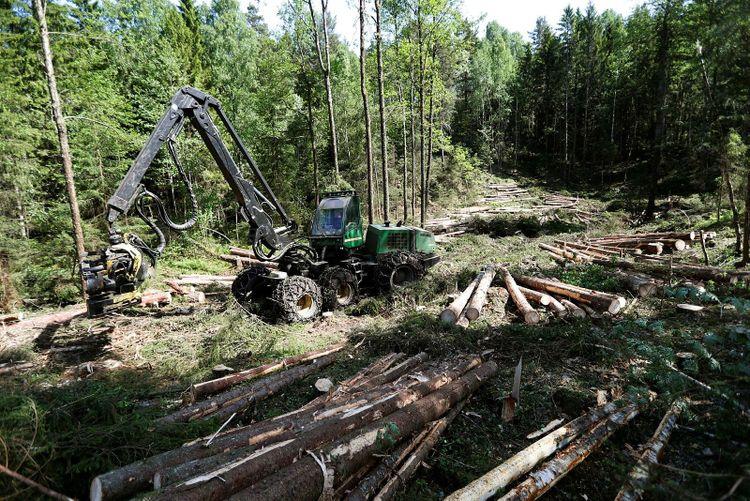 Skogsmaskin i arbete.