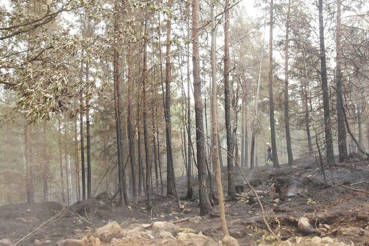 Bränd skog i Finsjö utanför Mönsterås.
