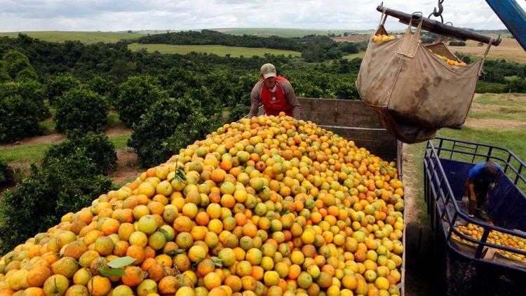 Apelsinodlare stämmer brasiliansk apelsinkung