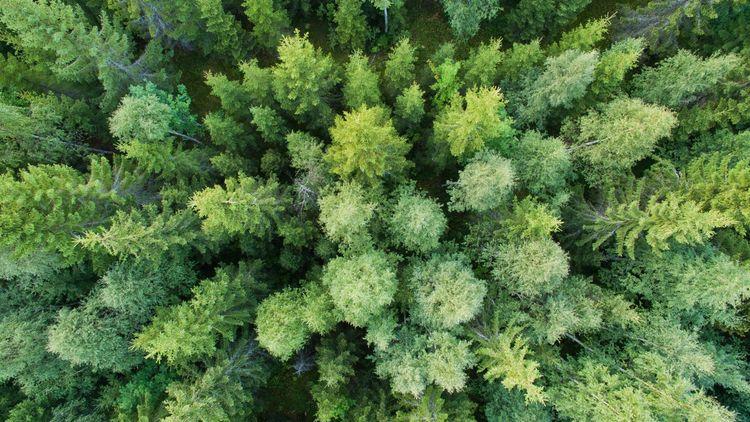 Virkesstudion – mest aktuella skogsfrågorna just nu