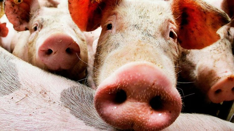 Fallande grispriser efter virusattack