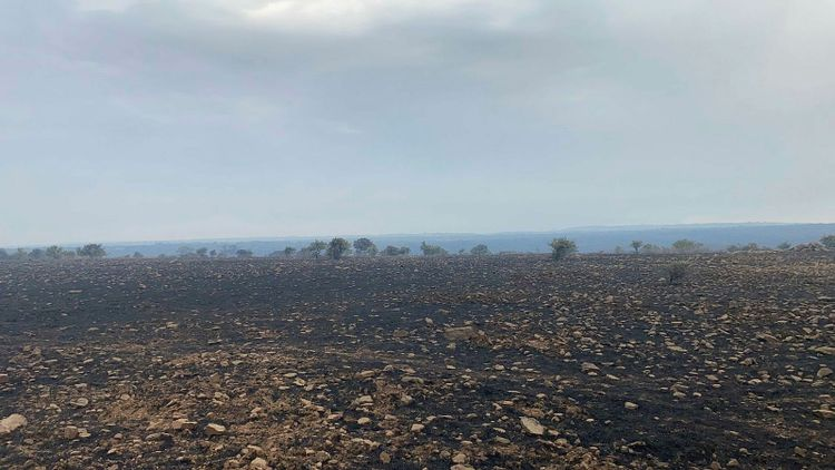 Skogar och betesmarker som har brunnit.