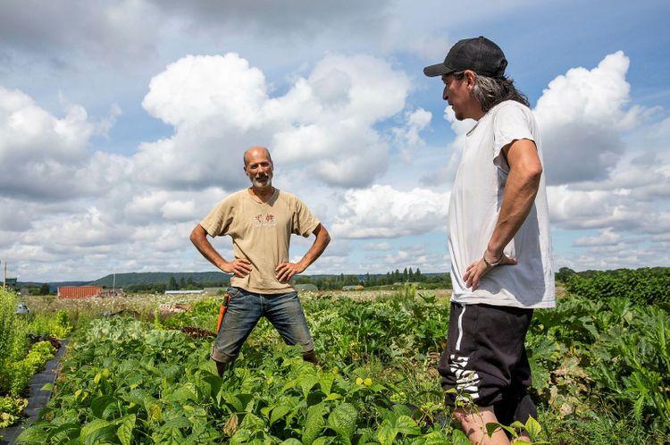 Två män i en grönsaksodling.