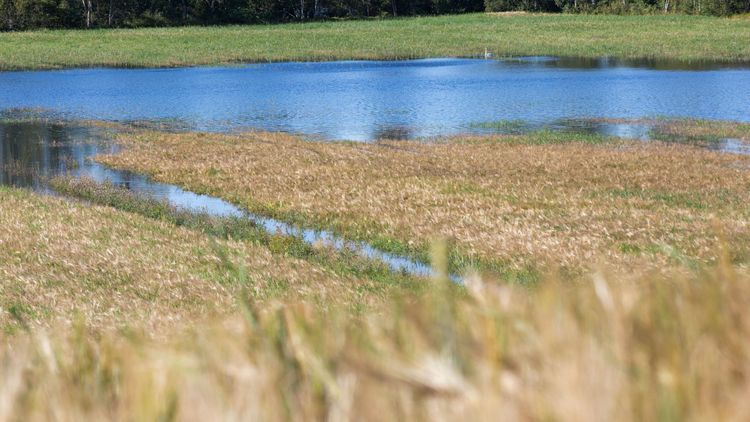 Investera i jordbrukets klimatanpassning