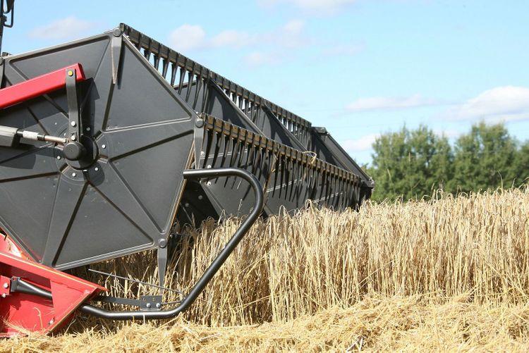 Massey Ferguson 2065 tuggar i sig korngrödan.