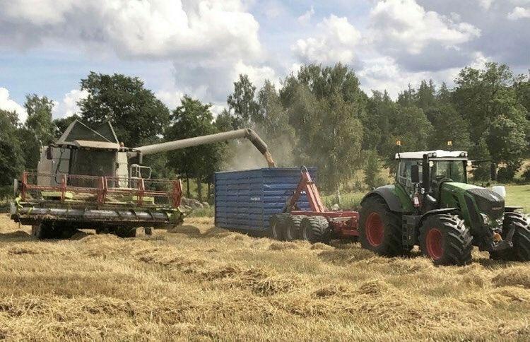 Nu är det rågvete-tröskning i Vimmerby-trakten och Fendt-traktorn är redo att dra hem spannmålen. Bild från Alexander Karlsson.