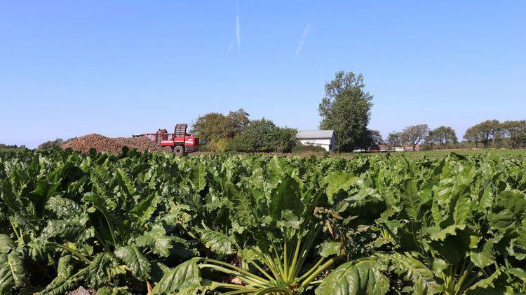Naturbruksgymnasium vill utöka med nya grödor