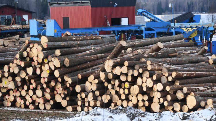 """""""Ensidig skogsrapportering i DN"""""""