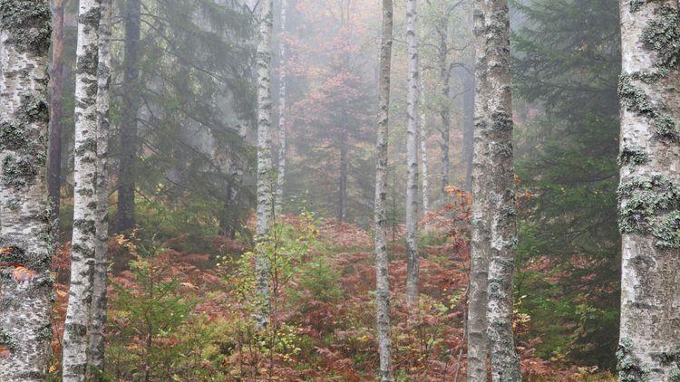 Replik: Klimatanpassad skog klarar angrepp bättre