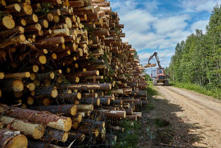 En granstock från Västerbotten kostar hälften så mycket som en som stått i Småland, enligt ATL:s granskning.