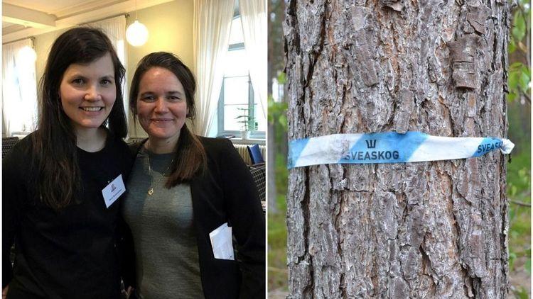 Skogsbolagen som är bäst och sämst på jämställdhet