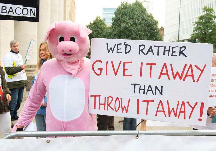Demonstrant utklädd till gris i Manchester vid det konservativa partiet Tories kongress.