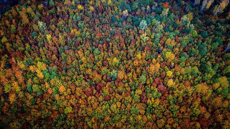"""""""Vissa bilder av skogen är mer legitima än andra"""""""
