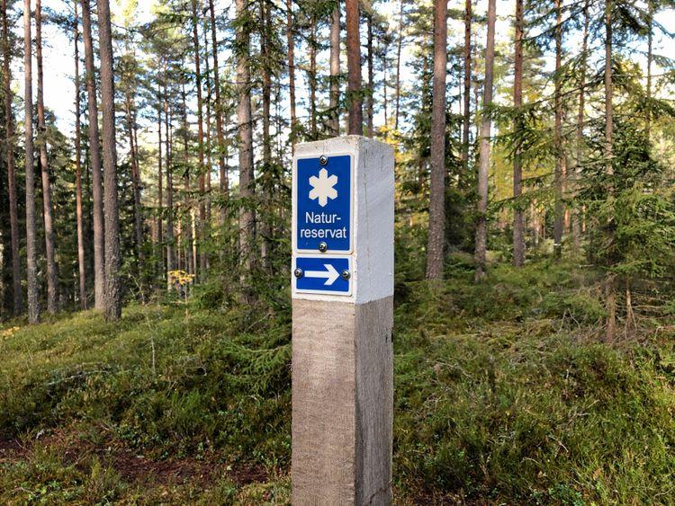 Rapporteringen av skyddad skog till EU måste utformas på ett sätt som gör det möjligt att jämföra olika länder, anser FAM.