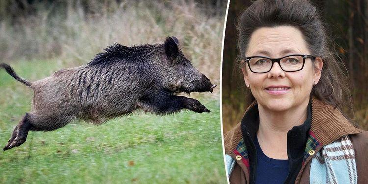 Importerat kött liten risk för svinpest
