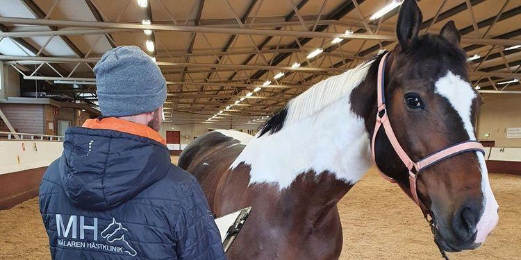 SLU kritiseras efter utbrott av dödligt hästvirus