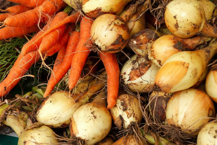 Närbild på skördade morötter och gullök.