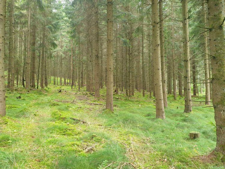 Skog i Vinslövs-Oretorp.