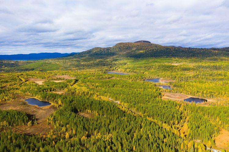 Skog i Jämtland.