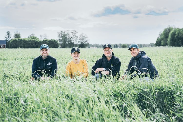 Fyra personer på ett fält.
