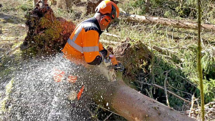 Man som arbetar med motorsåg i skogen.