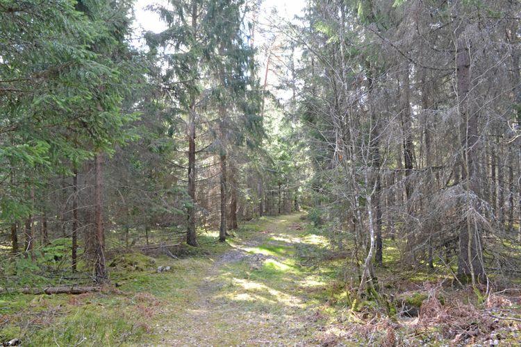 Skogsstyrelsen överklagar Kammarrättsdomen om ett uppmärksammat nyckelbiotopsfall i Norrtälje.