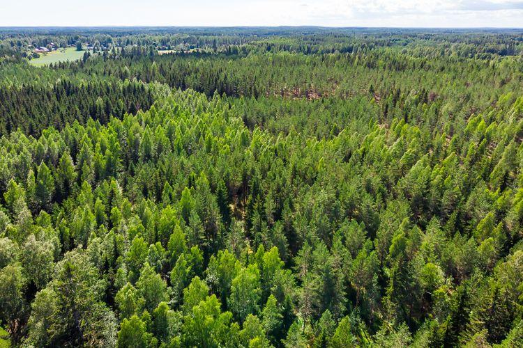 Av det finska virkesuttaget i fjol var 49 procent massaved, 36 procent timmer och 15 procent energived.