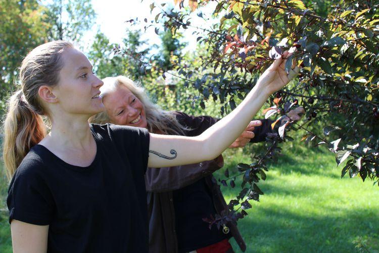 Två kvinnor vid äppelträd