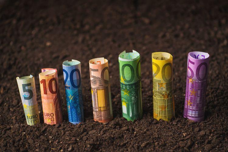 Hoprullade eurosedlar i olika valörer nedstuckna i myllan.