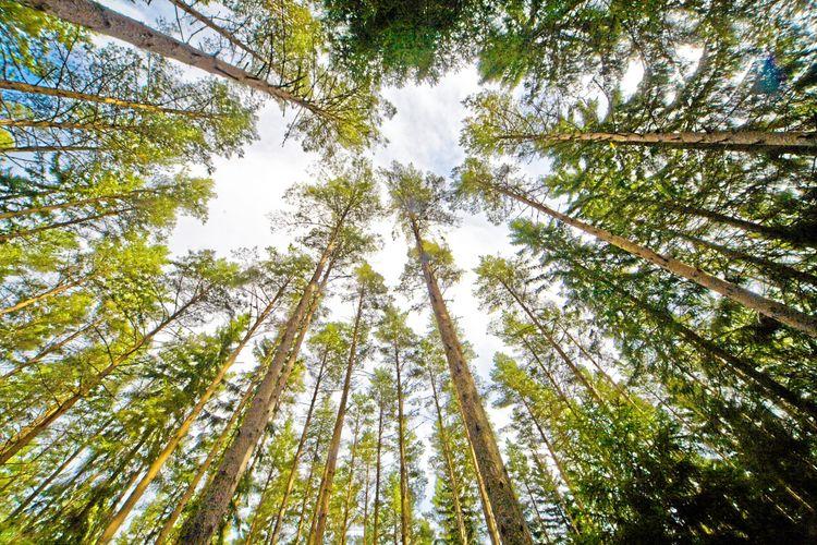 Det rör på sig i skogen, fast det kan vara svårt att se.